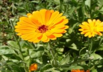 Img_garden_zoneB_photo1