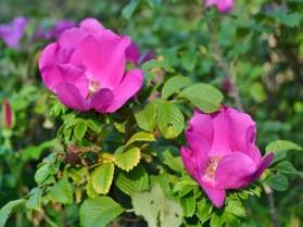 Img_garden_zoneB_photo15