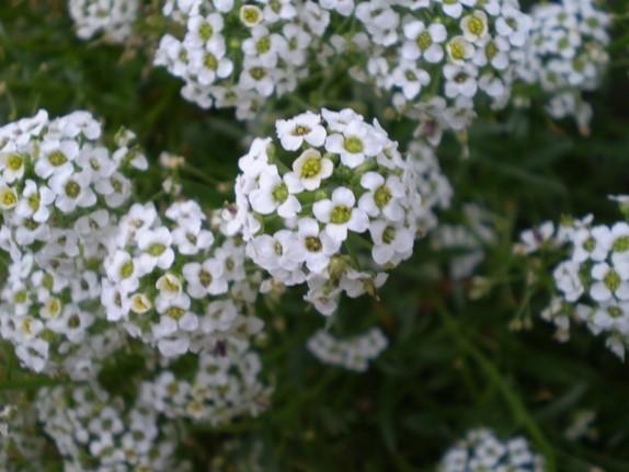 Img_garden_zoneB_photo16