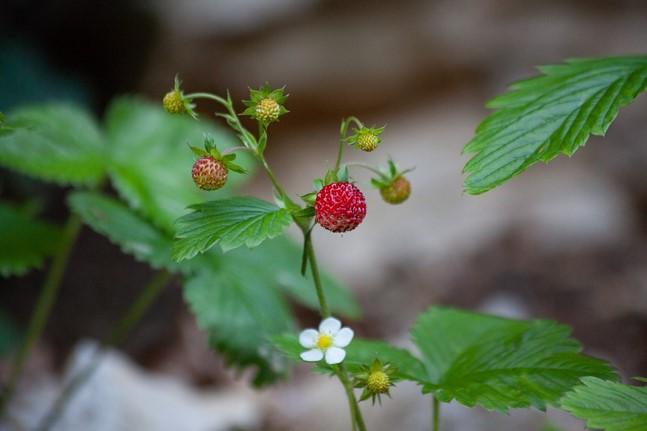 Img_garden_zoneB_photo17