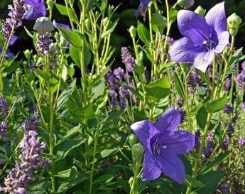 Img_garden_zoneC_photo19