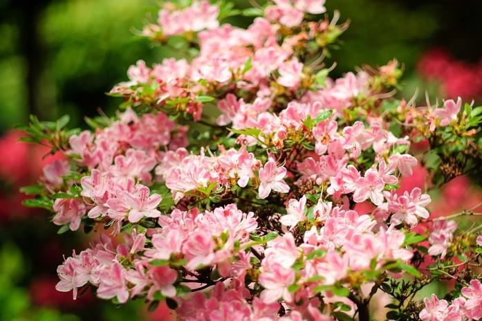 Img_garden_zoneC_photo2