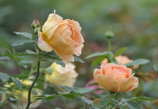 Img_garden_zoneC_photo3