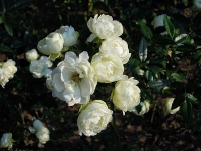 Img_garden_zoneC_photo6