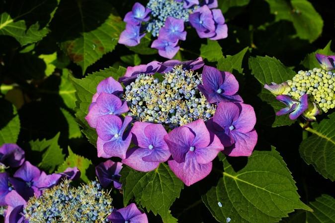 Img_garden_zoneC_photo8