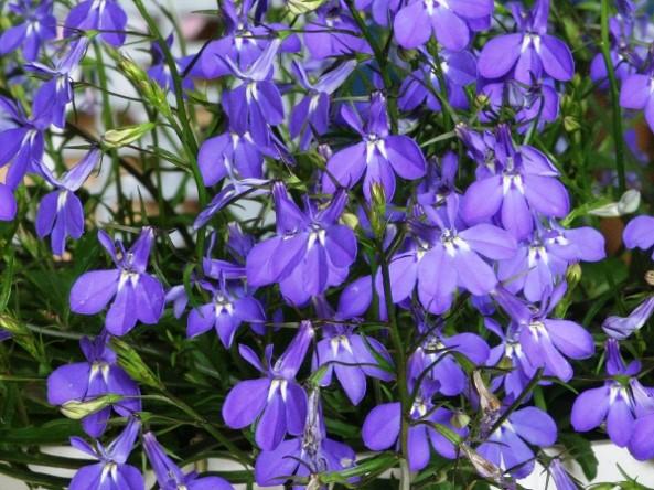 Img_garden_zoneC_photo9