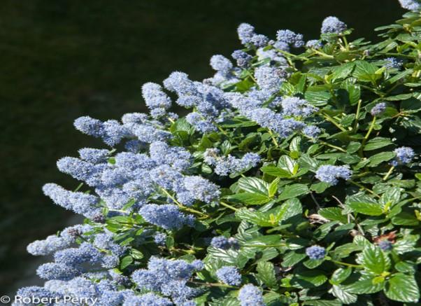 Img_garden_zoneD_photo12