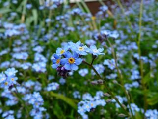 Img_garden_zoneD_photo9