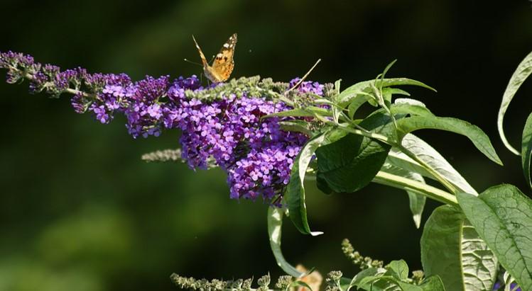 Img_garden_zoneE_photo3