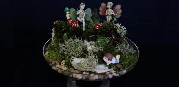 img_blog_slider_Fairy garden2021-1.jpg